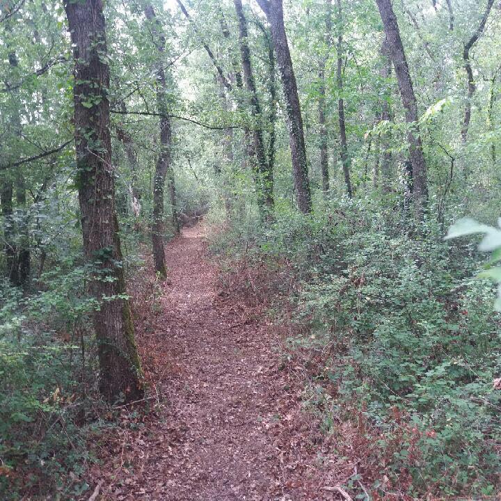 sentier sous bois